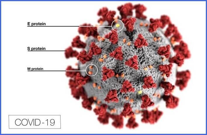 Covid-19 S-protein