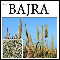 Bajra Varieties