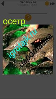 разведение рыбы осетр ответ на 26 уровень 400 плюс слов 2