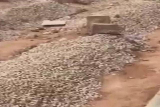 حدث في الرياض... أوصى بدفنه قرب زوجته وما حدث بعد ساعات صادم تعرفوا على التفاصيل المفاجئة