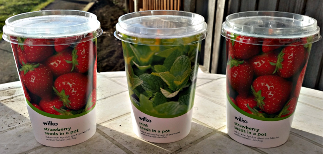 tomato and mint seed pots