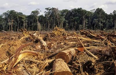 Retroceso delos Bosques: Deforestación
