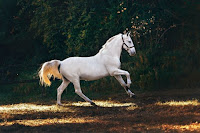 White Horse Photo by Helena Lopes on Unsplash
