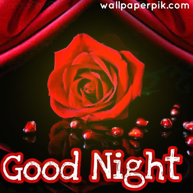 pink red rose wallapper good night images