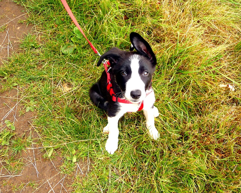 Mollie In Bakewell: Mollie The Border Collie Diaries
