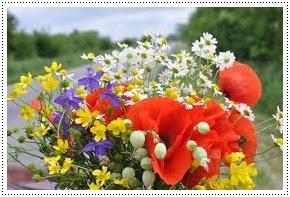 Minden kedves blogolvasómnak kívánok szép napokat...????