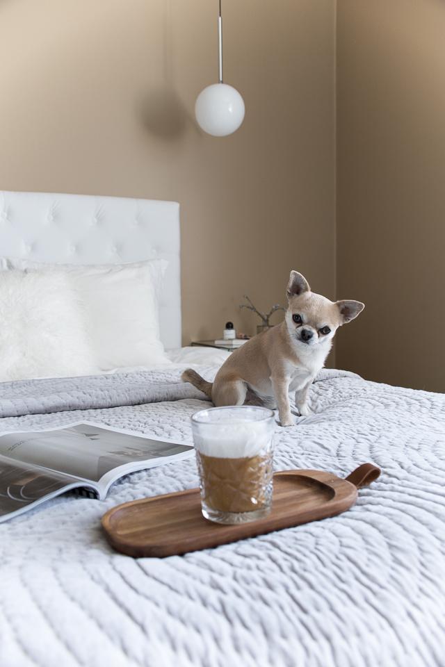 Villa H, chihuahua, koirat, kahvihetki, inspiraatio