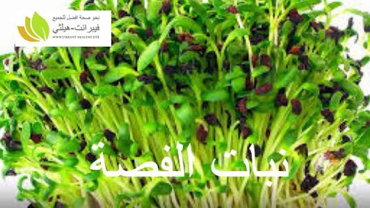 نبات الفصة
