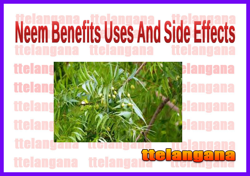 Neem Benefits Uses And Side Effects