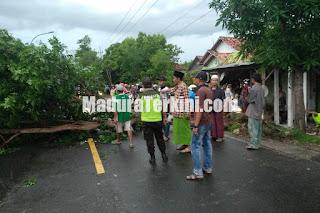 Pohon tumbang di Sampang