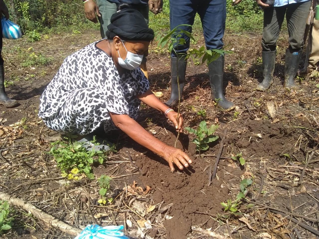 hoyennoticia.com, Reforestación con especies nativas