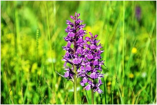 Orquídea plantada no solo