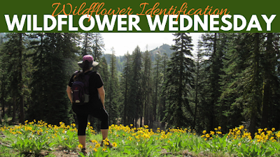where to find wildflowers in northern california