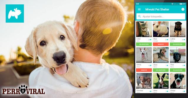 La nueva aplicación móvil para adoptar perros sin peligros ni riesgos de manera legal