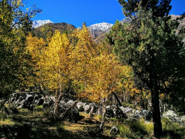 Scenic Forest Trail from Chitkul to Sangla
