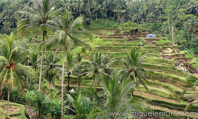 Tegalalang-Rice-Terraces-colores