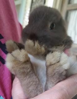 clover bunny 3
