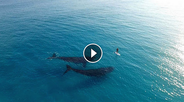 Paddle Boarding with Whales Esperance Australia