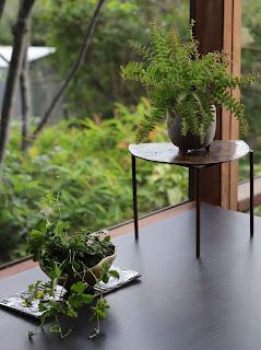陶板の上のヘビイチゴの山野草盆栽と高い台にのったクジャクシダの山野草盆栽