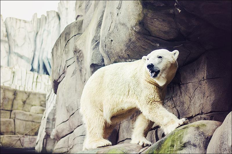 Stephanie Berger - Fotografie - Hamburg - Tierpark Hagenbeck