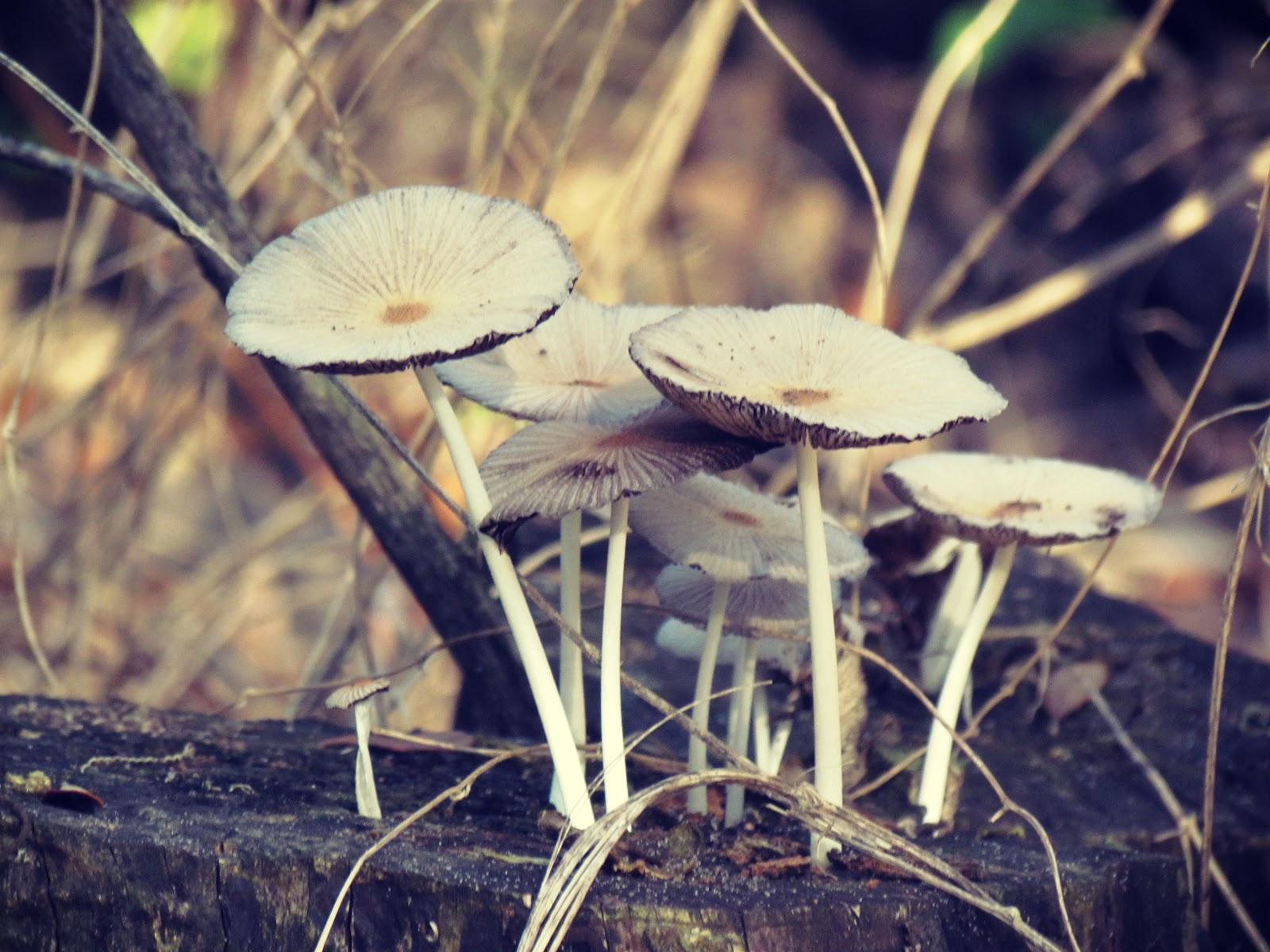 Forage for Mushrooms During Florida's Autumn Mushroom Hunting Season