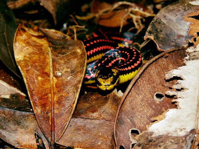 Schlangen Madagaskars