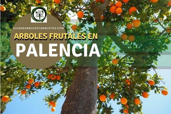 Arboles frutales en la Palencia, España