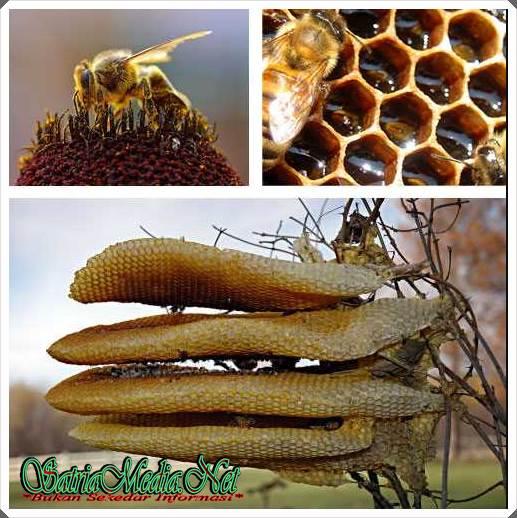 Desain Rumah Lebah Yang Rumit dan Rapi