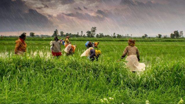 मोदी सरकार के इस योजना से मुफ्त में बनवाएं किसान क्रेडिट कार्ड, मिलेगा 3 तक लोन
