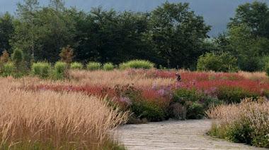 Tokachi Millennium Forest, de Dan Pearson: nueva forma de cultivar un jardín en armonía con la naturaleza