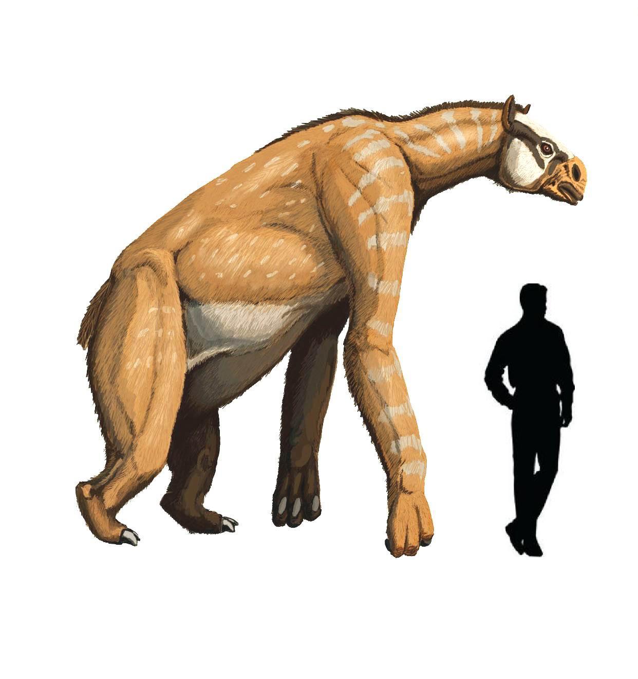 1242 x 1320 jpeg 113kBChasmatosaurus