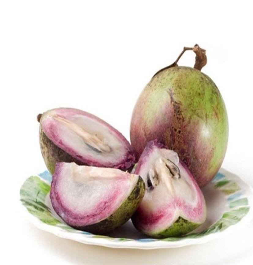 biji benih buah sawo durian 3 biji Maluku Utara