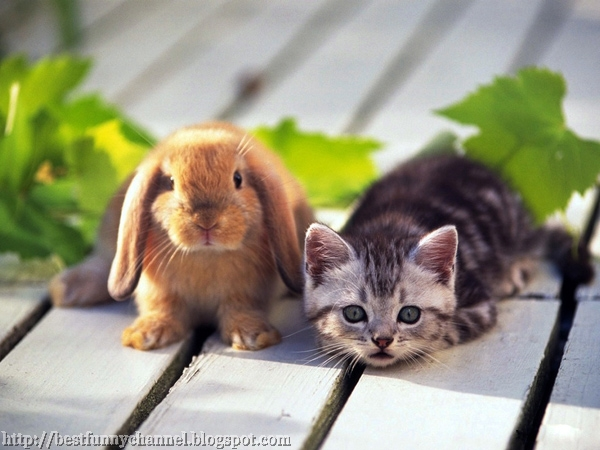 Red bunny and kitten