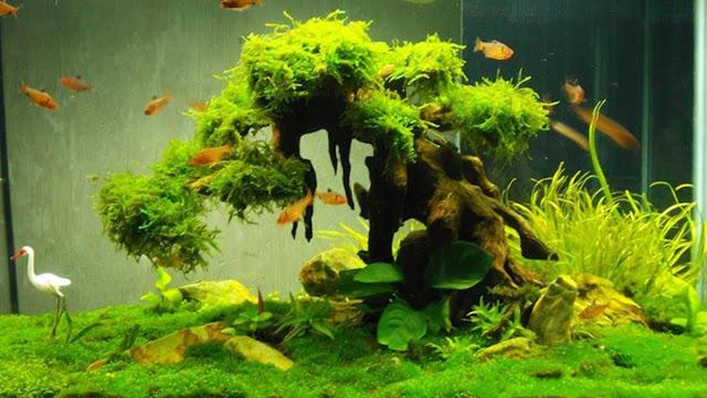 quan sát cây cối, cá tép để xử lý kịp thời