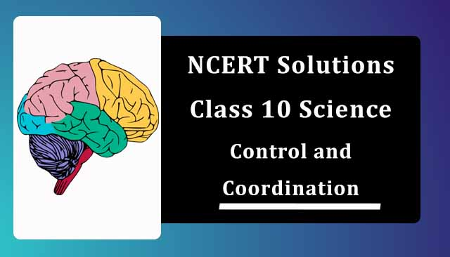 NCERT Solutions for Class 10 Science Chapter 7 Control and Coordination
