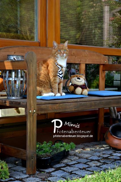 Katze Mimi auf einer Bank