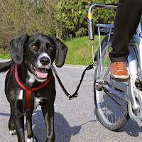 La laisse Trixie Biker-Set sécurité promenade à vélo avec son chien