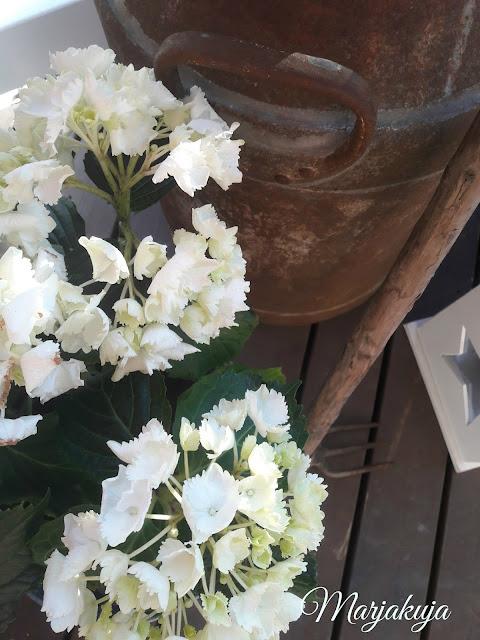 hortensia ruosteiset wanhat romut