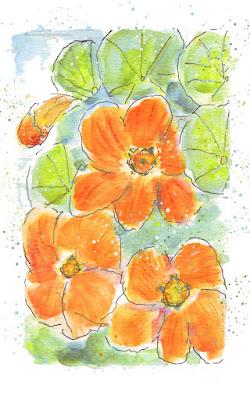 Orange nasturtium flowers in watercolor/watercolour pen and wash