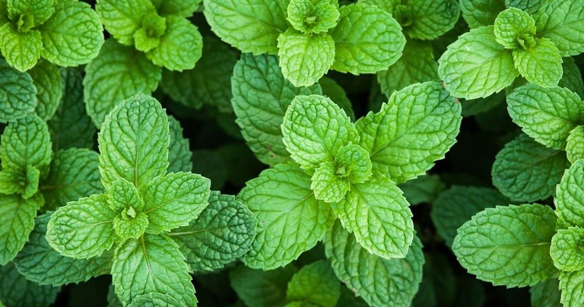 Remèdes et médecine douce: 6 des meilleures plantes pour ...