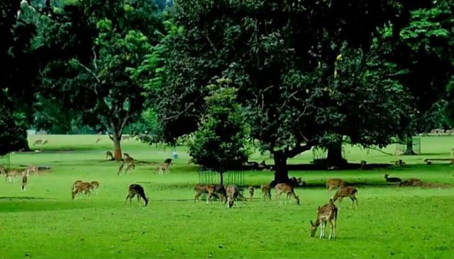 Wisata Kebun Raya Bogor Pusat Konservasi Tumbuhan Tertua Wisata Kebun Raya Bogor - Pusat Konservasi Tumbuhan