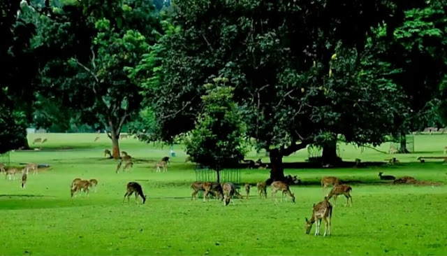 Wisata Kebun Raya Bogor