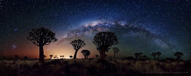 Dải Ngân Hà trên bầu trời rừng cây Quiver. Tác giả : Florian Breuer.