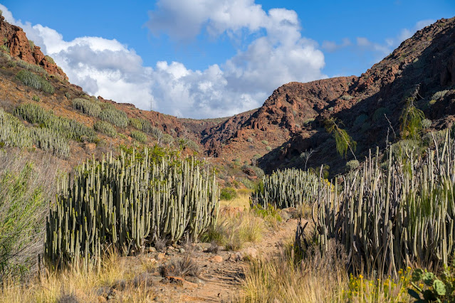 Wanderung zu den Wasserfällen im Barranco del Toro | San Agustín/Maspalomas | Wandern auf Gran Canaria 19