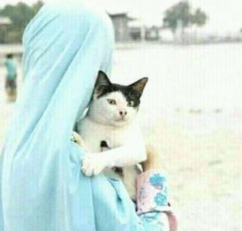 Gambar Kucing Kocak godean.web.id