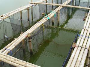 Daftar Harga Waring Ikan per Maret 2021