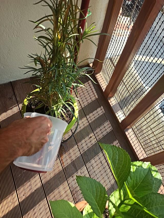 Πώς ποτίζουμε και φροντίζουμε της γλάστρες μας το καλοκαίρι.