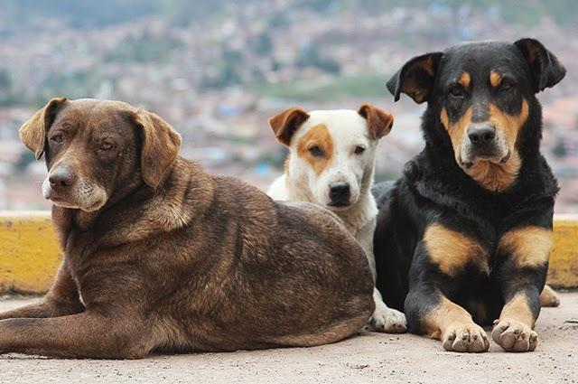 Μέτρα προστασίας στον Δήμο Τυρνάβου μετά τις τελευταίες επιθέσεις αδέσποτων ζώων