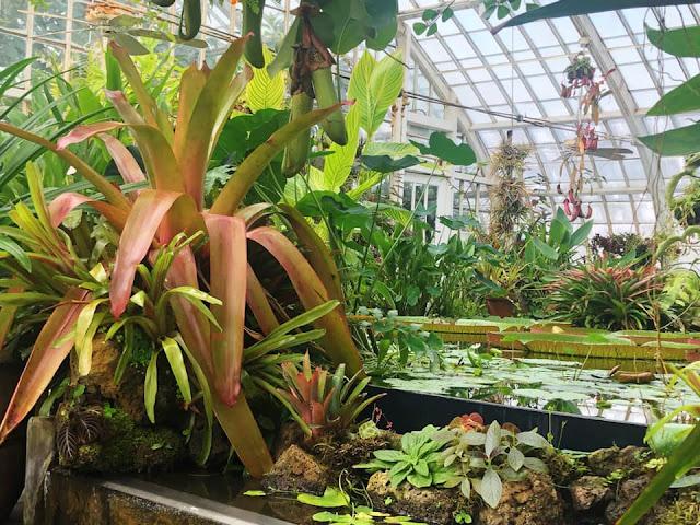 visite du Conservatoire des fleurs San Francisco