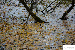 A Photo a Week Challenge: Leaves Herbst Blätter auf dem See